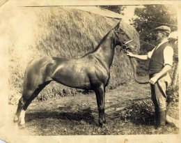 grandfather with horse